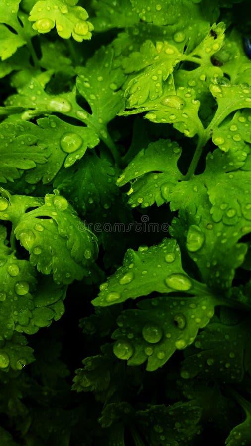 Groen gras na regen royalty-vrije stock afbeeldingen