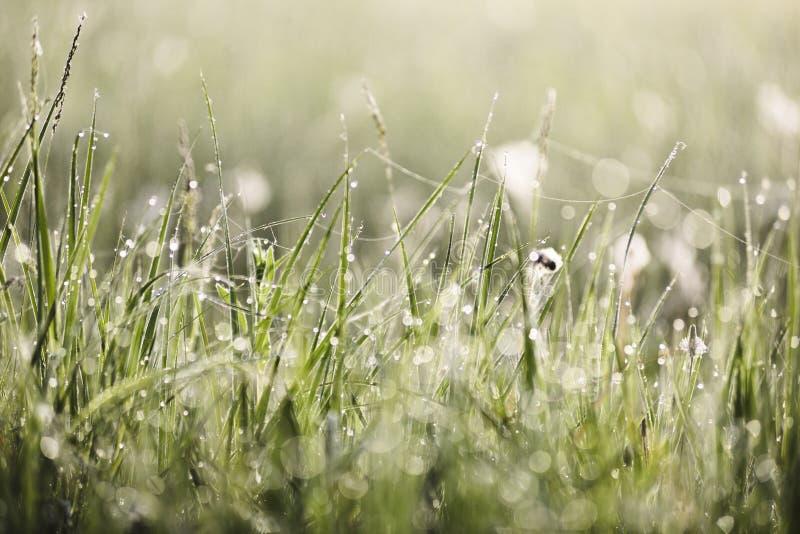 Groen gras in ochtenddauw en spinnewebben met de achtergrond van de bokehtextuur stock foto