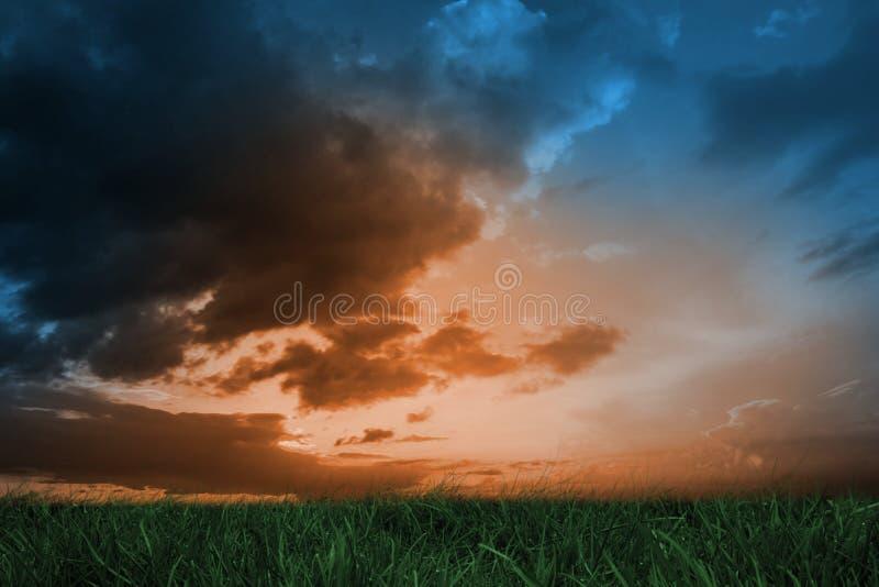 Groen gras onder blauwe en oranje hemel stock illustratie