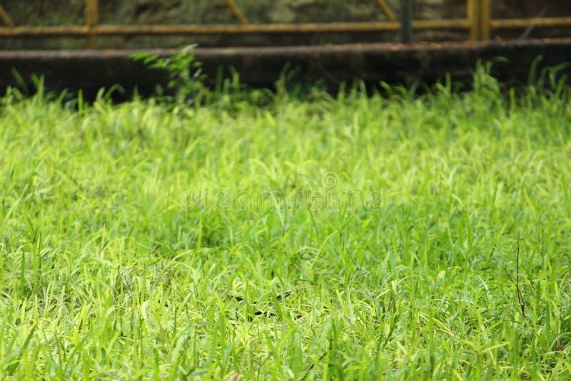 Groen gras op achtergrond stock afbeeldingen