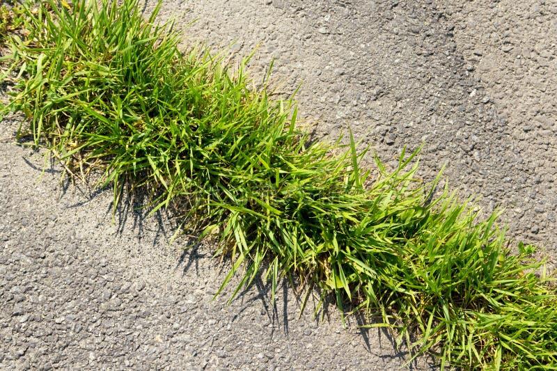 Groen gras op breuk van asfalt stock foto's