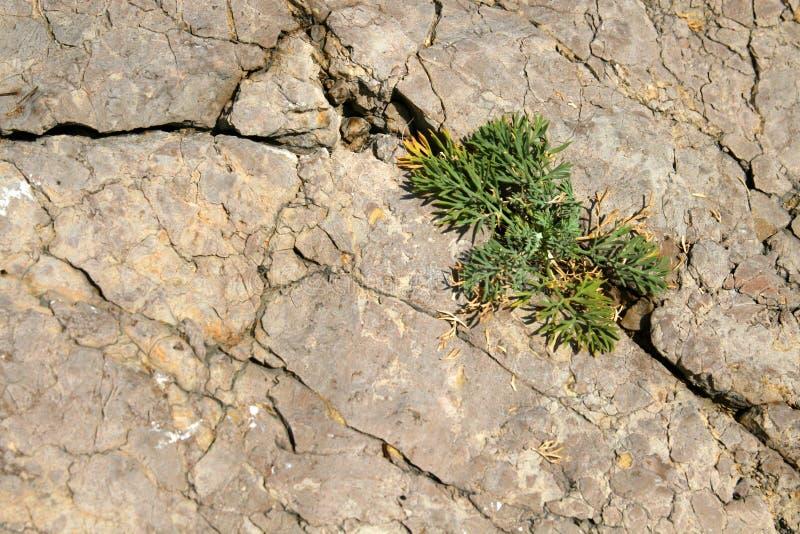 Groen gras op de steen stock fotografie