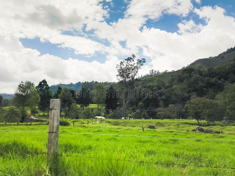 Groen gras op de weg royalty-vrije stock foto