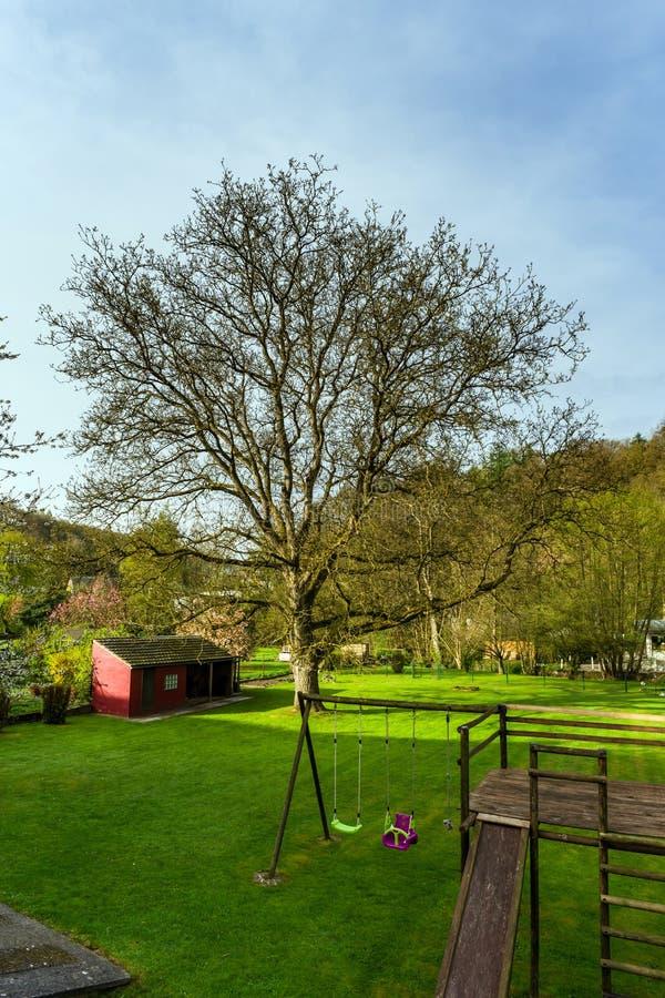 Groen gras op de zon in de privé tuin stock fotografie