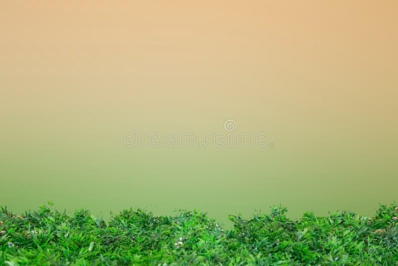 Groen gras op duidelijke brow en groen stock afbeelding