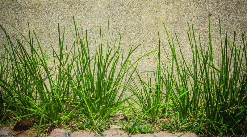 Groen gras op gewassen steenmuur, achtergrond stock afbeelding