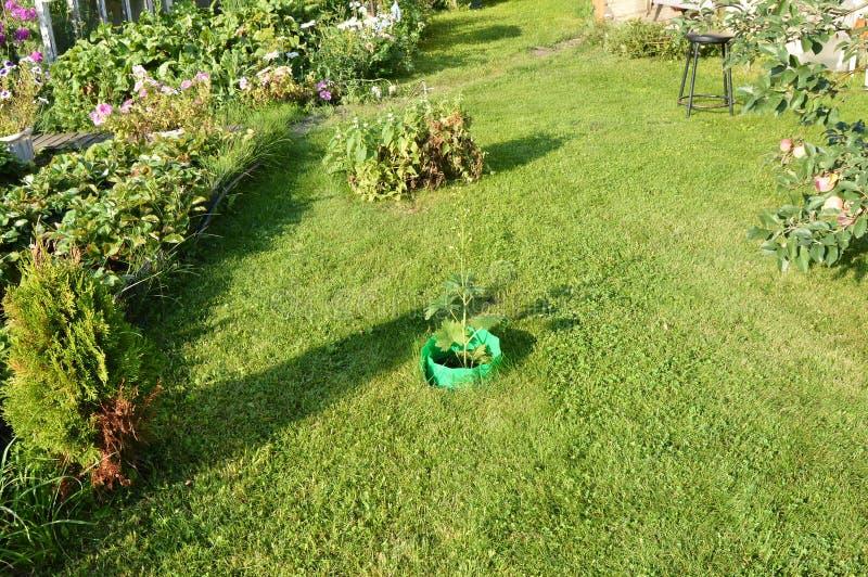Groen gras op het gazon en rond de bloembedden, de ruimte dichtbij het buitenhuis stock fotografie