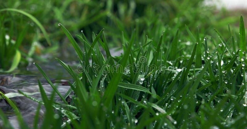 Groen gras op rivier met waterdalingen op het stock foto