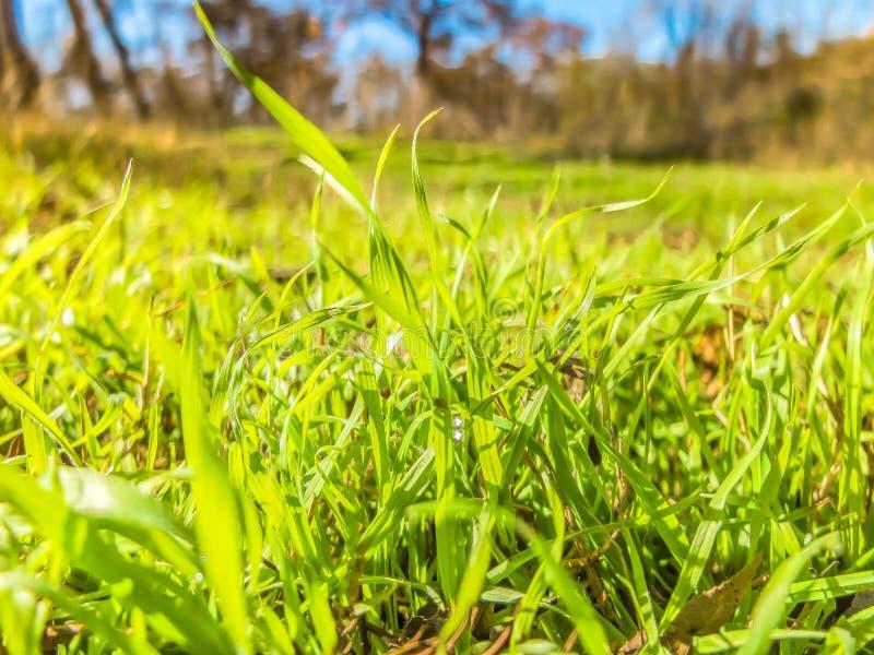 Groen gras op weide royalty-vrije stock foto