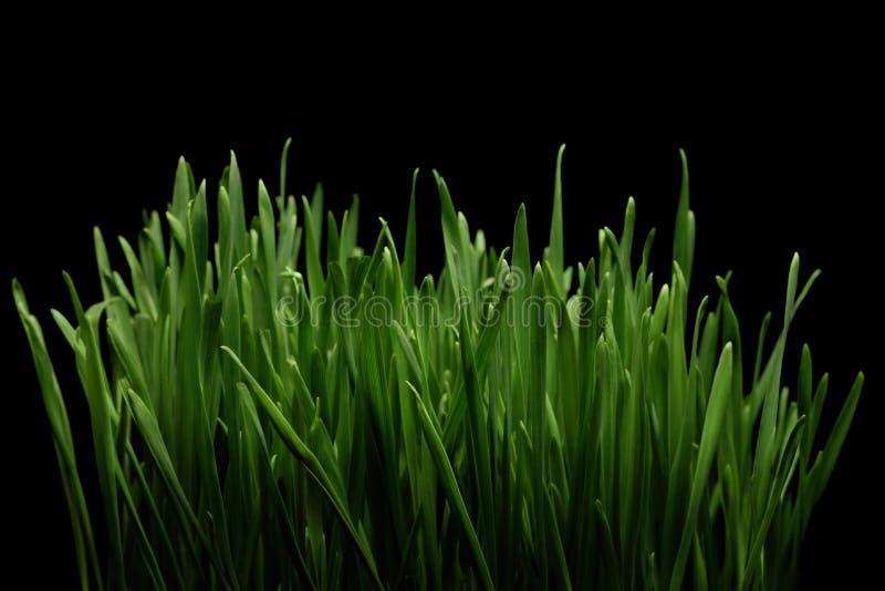 Groen gras op zwarte achtergrond royalty-vrije stock afbeeldingen
