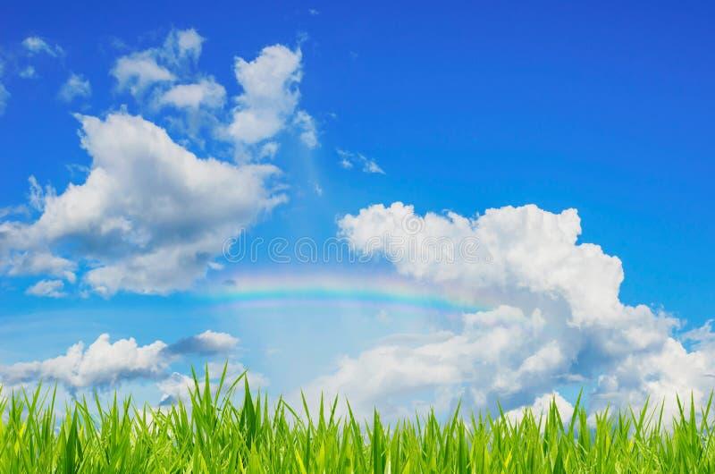 Groen gras over een blauwe hemelachtergrond en een regenboog stock afbeeldingen