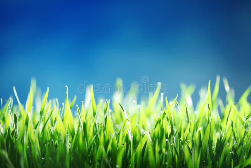 Groen gras tegen blauwe hemelachtergrond stock afbeeldingen