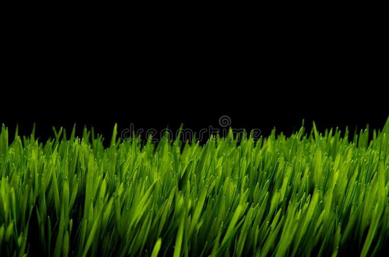 Groen gras tegen zwarte nachthemel stock foto's