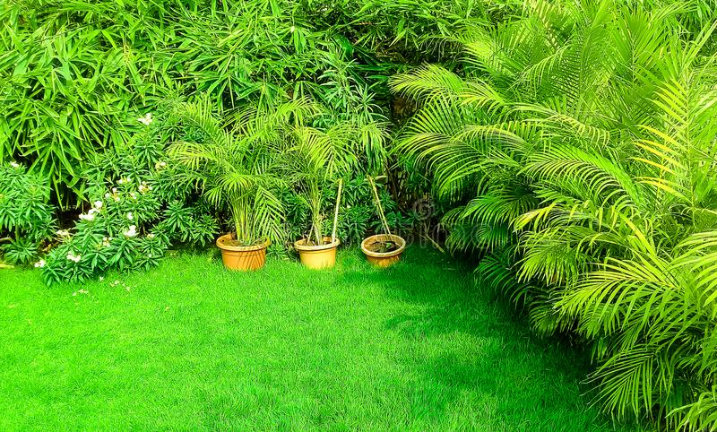 Groen gras in tuin stock foto's