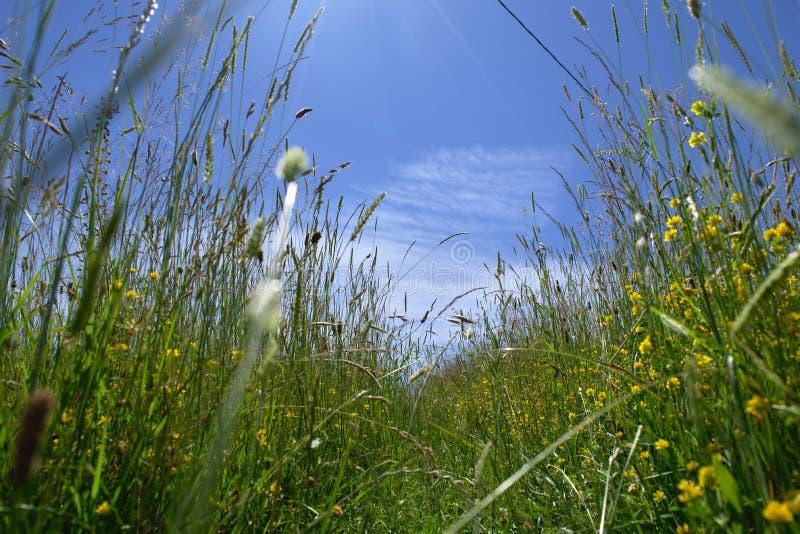 Groen, groen gras van huis royalty-vrije stock fotografie