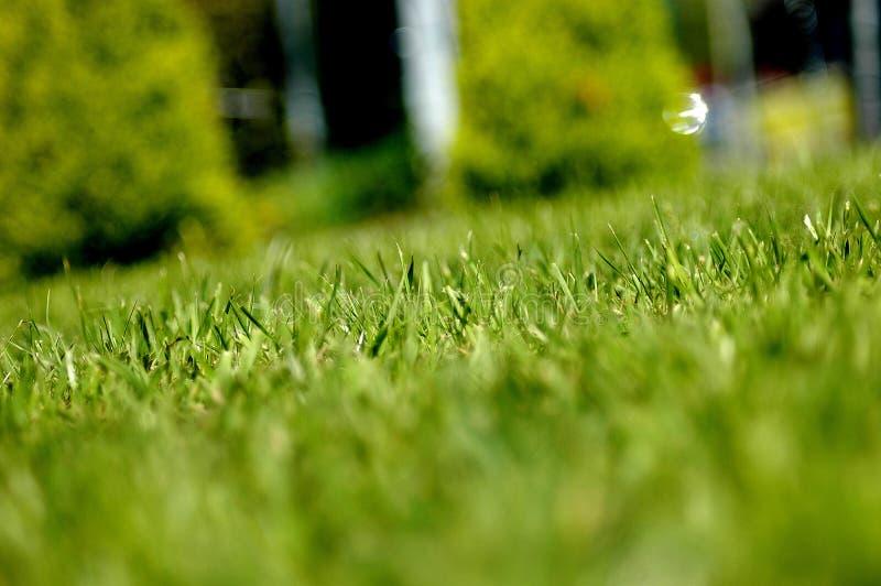 Groen gras van huis stock afbeelding