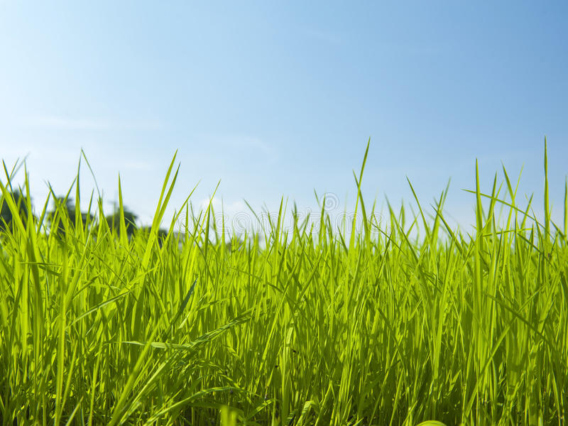 Groen grasgebied royalty-vrije stock fotografie