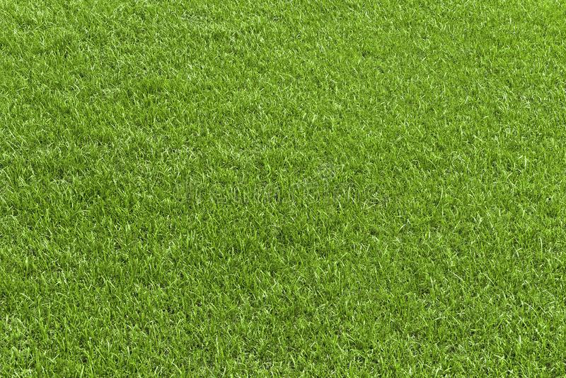 Groen grasgebied, groen lawbgoed voor textuur en achtergrond royalty-vrije stock foto
