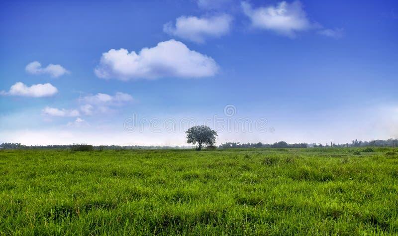 Groen Grasgebied met de blauwe hemel royalty-vrije stock fotografie