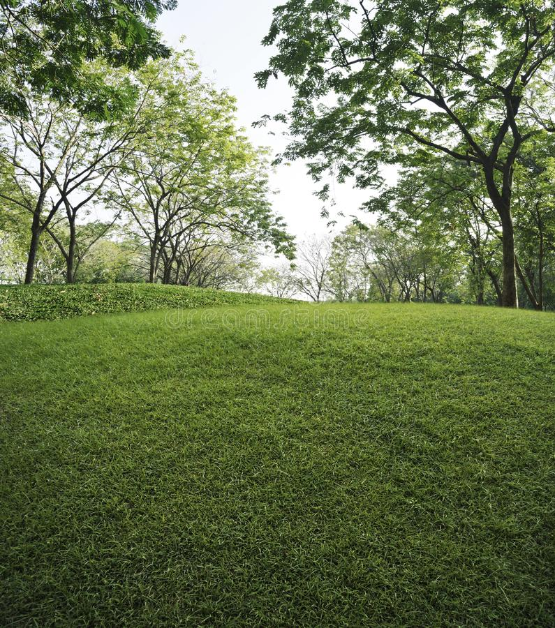 Groen grasgebied met groene verse boom in openbaar park, aard B royalty-vrije stock fotografie