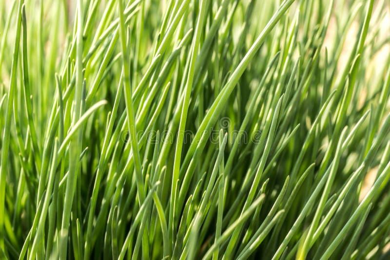 Groen helder gras stock foto