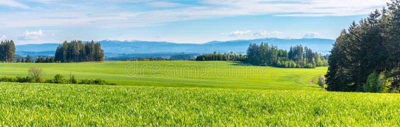 Groen heuvelig landschap met Reuzebergen, Tsjech: Krkonose, op horizon, Tsjechische Republiek royalty-vrije stock fotografie