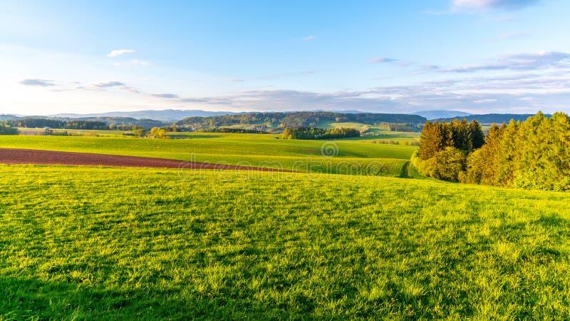 Groen heuvelig landschap met Reuzebergen, Tsjech: Krkonose, op horizon, Tsjechische Republiek stock fotografie