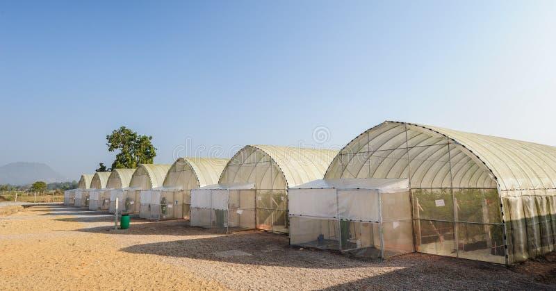 Groen huis, installatietunnel het nieuwe moderne gewassensysteem om opbrengst en kwaliteit te verbeteren. stock foto's