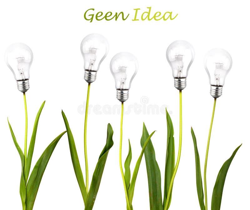 Groen ideeconcept royalty-vrije stock afbeelding