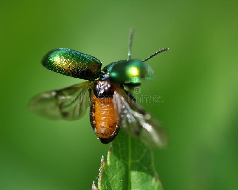 Groen insect royalty-vrije stock fotografie