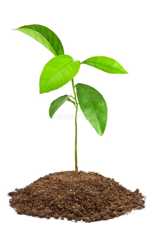 Groen jong boompje stock afbeelding