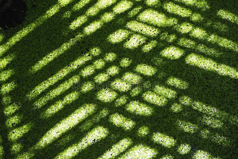 Groen kanaal in kokosnotenlandbouwbedrijf stock afbeeldingen
