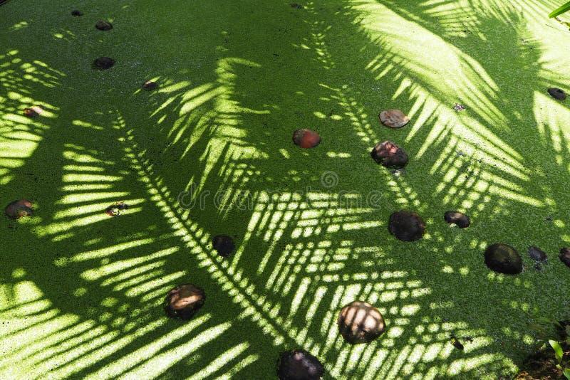 Groen kanaal met kokosnoot in Thailand stock foto's