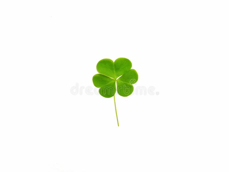 Groen klaverblad op witte achtergrond De dag van heilige Patrick ` s royalty-vrije stock foto's