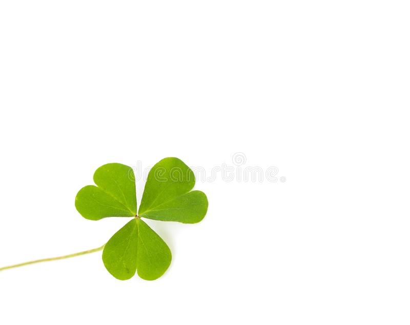 Groen klavertjevierblad op wit royalty-vrije stock fotografie