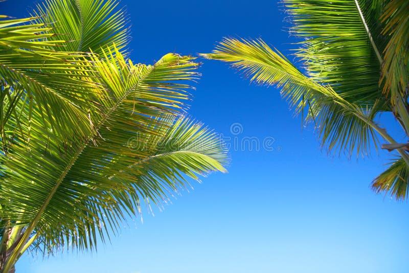 Groen kokospalmenblad op blauwe hemel royalty-vrije stock fotografie