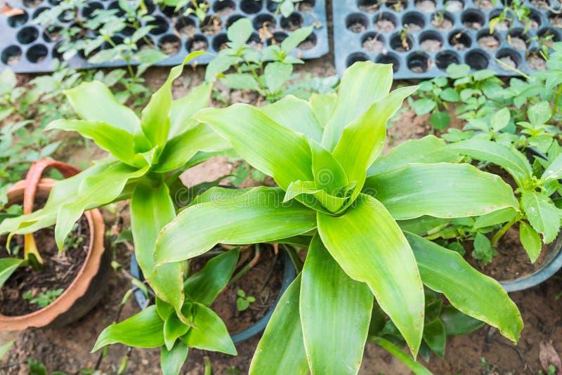 Groen kruid stock fotografie