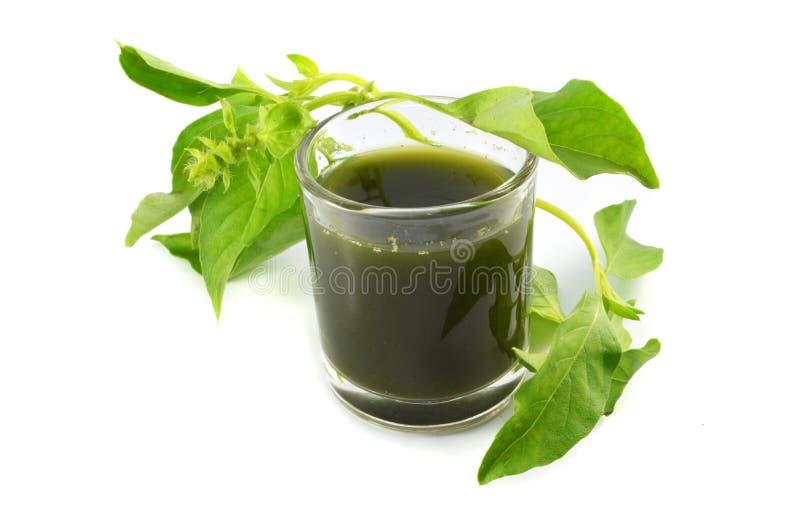 Groen kruidenbasilicum stock fotografie
