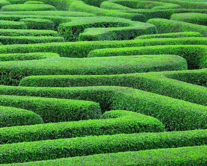 Groen labyrint stock afbeeldingen