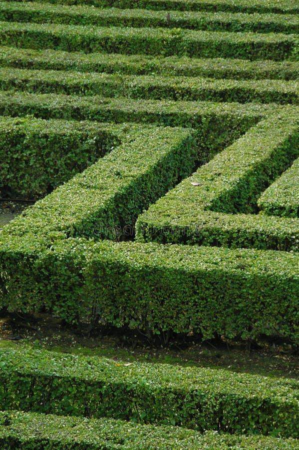 Groen labyrint stock fotografie