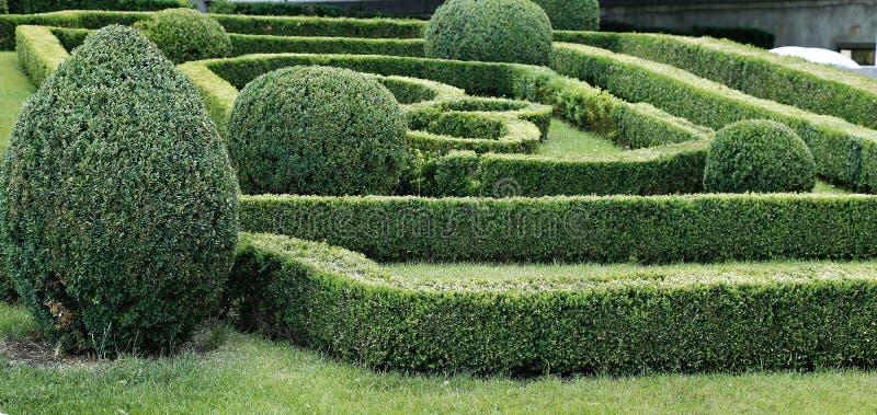 Groen labyrint van in orde gemaakte bukshoutstruiken stock foto