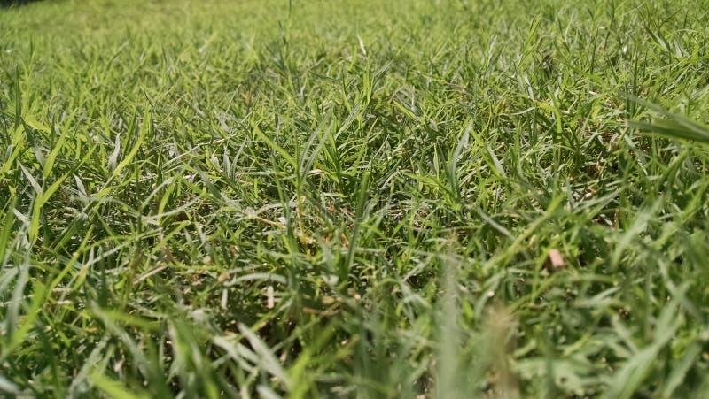 Groen land stock fotografie