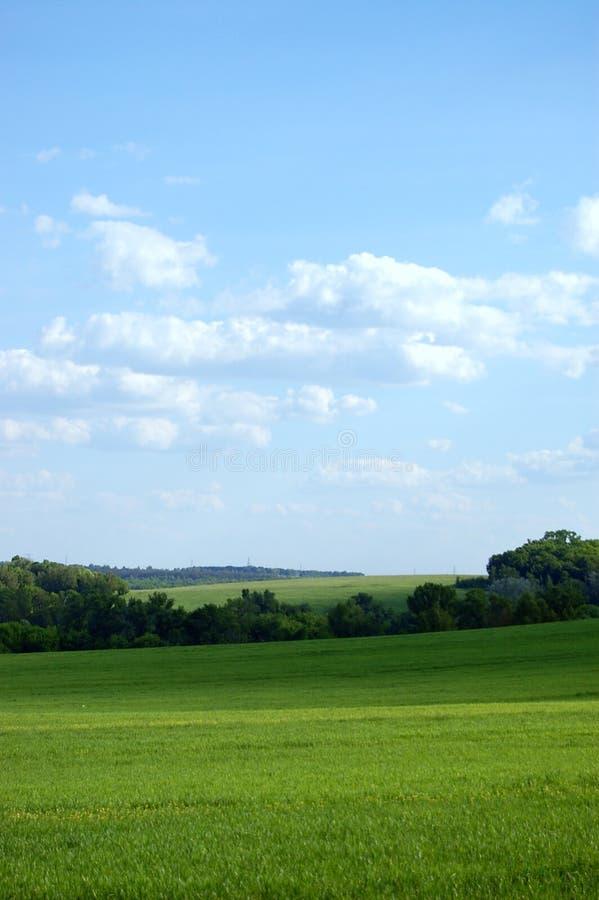 Groen landbouwbedrijfgebied stock foto's