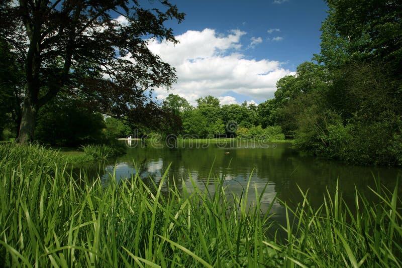 Groen landschap royalty-vrije stock foto