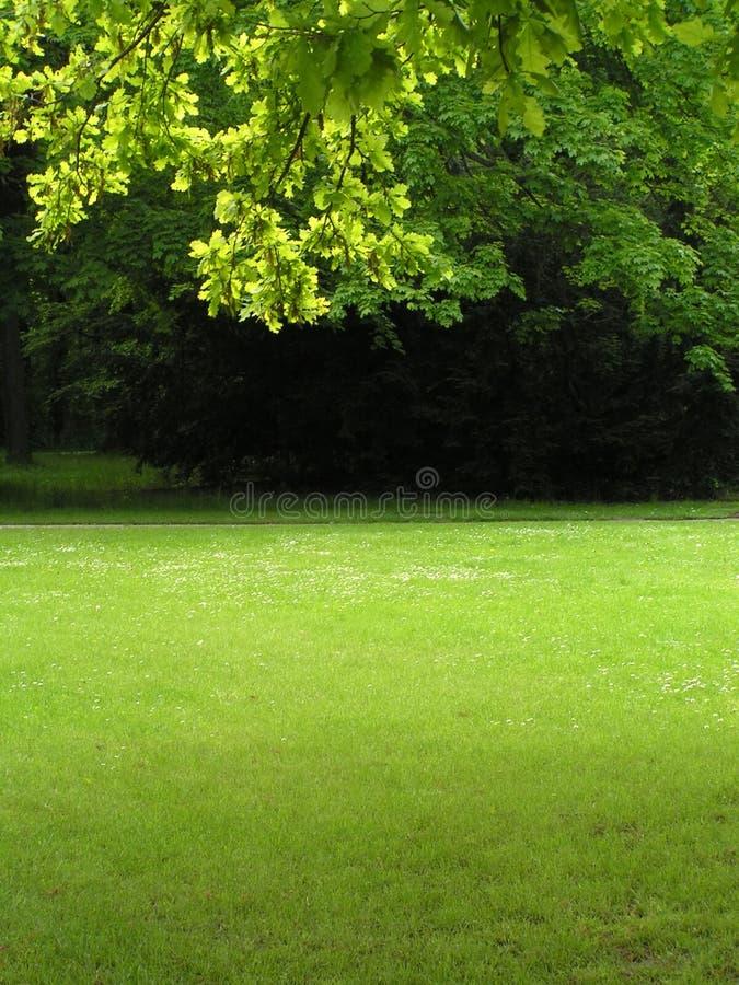 Groen landschap 2 stock afbeeldingen