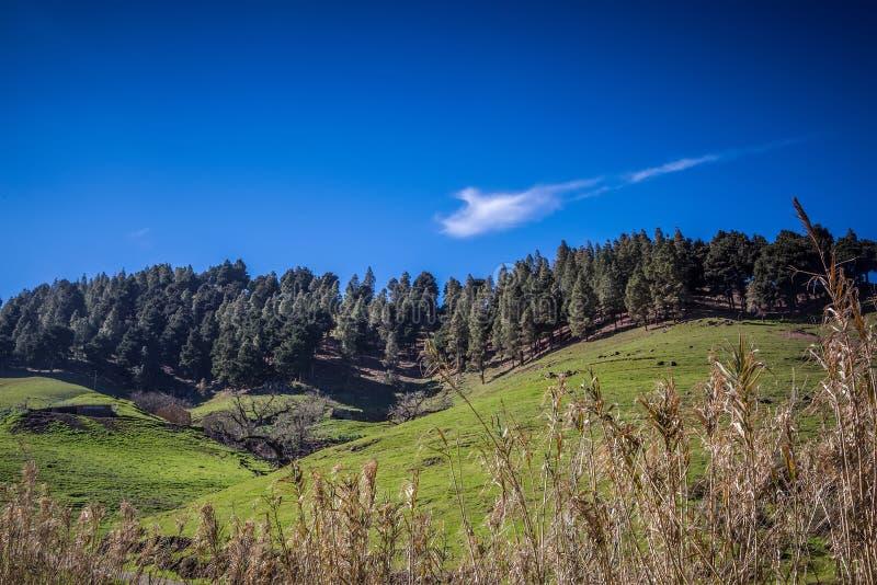 Download Groen landschap stock foto. Afbeelding bestaande uit boom - 39108320
