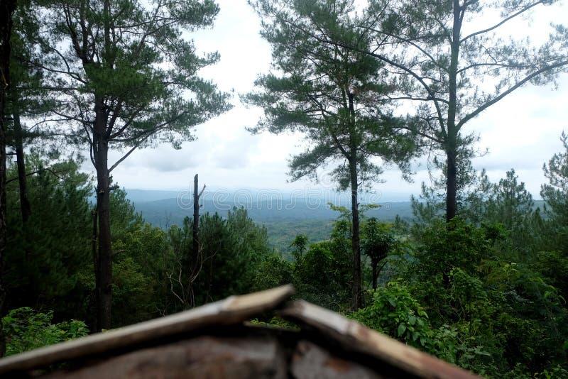 Groen landschap met blauwe hemel stock fotografie