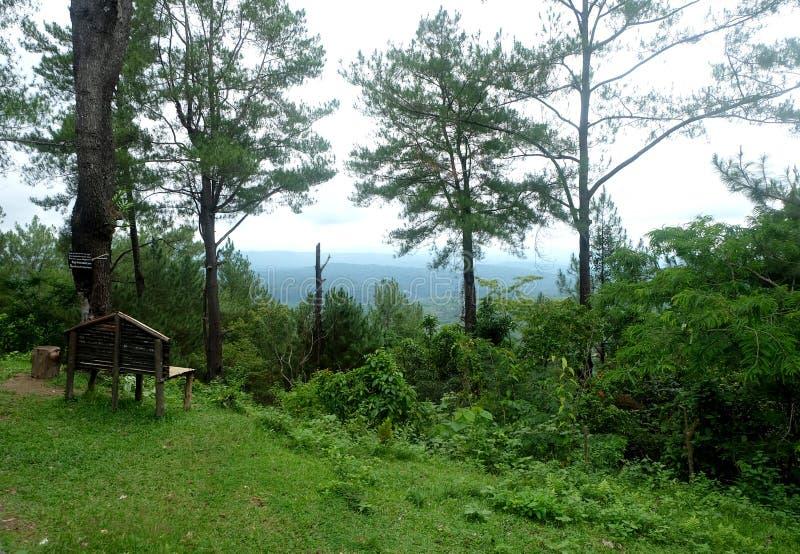 Groen Landschap met mooie blauwe hemel royalty-vrije stock fotografie