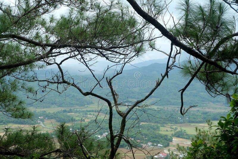 Groen Landschap met mooie blauwe hemel stock fotografie