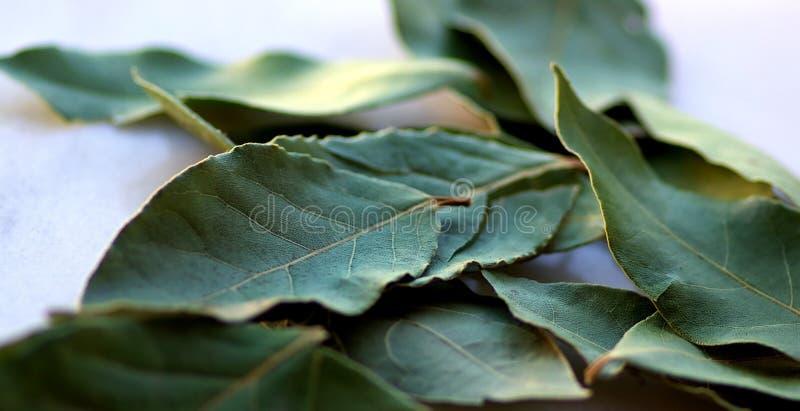 Groen laurierblad. stock fotografie